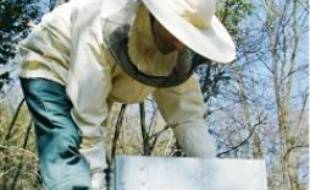 Les ruches ont été installées sur la colline de la Duchère (9e)