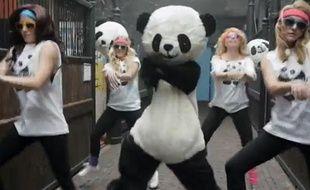 Capture d'écran de la vidéo Gangnam Style Panda.