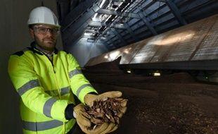 Un technicien montre des plaquettes de bois qui vont être brûlées dans la plus grande centrale biomasse de France, à Gardanne, près d'Aix-en-Provence, le 3 février 2016