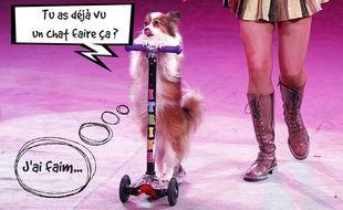 Illustration d'un chien dans un cirque en Ukraine. Montage PicMonkey