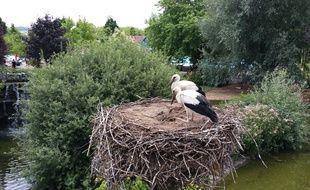 Des cigognes, l'emblématique oiseau alsacien, au parc Cigoland. Illustration