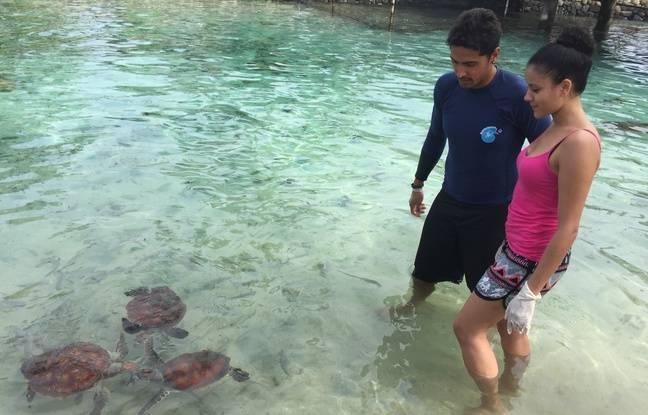 Cerise Calixte découvre les tortues à Morea