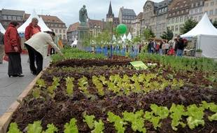 Strasbourg a été élu capitale française de la biodiversité 2014. (Illustration)