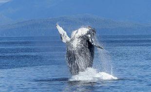 Une baleine s'est échouée sur une plage en Sicile. (Illustration)