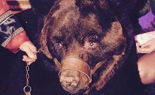 L'ours muselé participait à une soirée cirque organisée par la discothèque La Scala samedi soir.