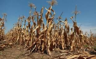 La sécheresse qui frappe depuis le mois de juin les Etats-Unis, la plus grave en 25 ans, n'est pas près de se terminer et des températures très élevées accompagnées d'un temps sec sont à prévoir dans les prochains mois, ont annoncé jeudi des météorologues.
