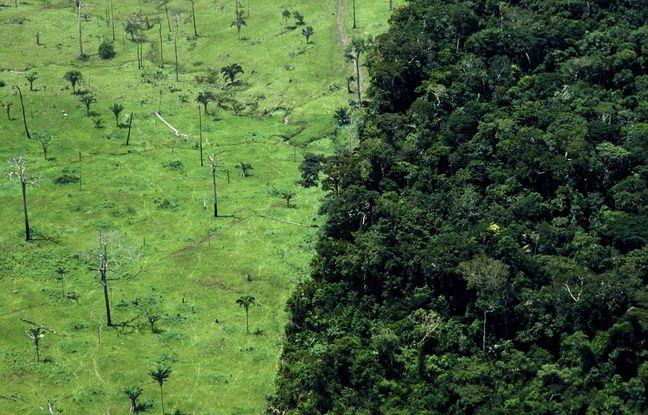 648x415 selon rapport plusieurs organisations environnementales quasi totalite deforestation amazonie bresilienne illegale