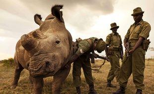 Le rhinocéros Sudan avec ses gardes au Kenya
