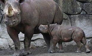 Un rhinocéros noir et son petit au zoo de Tokyo, le 12 juin 2009 (image d'illustration).