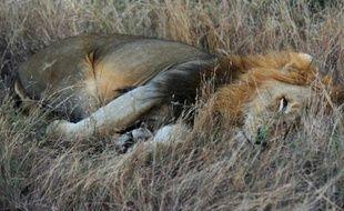 Photo d'archives d'un lion au parc Kruger en Afrique du Sud, le 21 juin 2010
