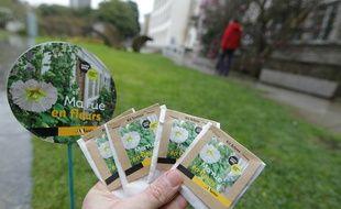 NANTES, le 21/03/2013 La ville de Nantes propose gratuitement aux habitants de récupérer des kits de graines pour faire pousser des fleurs résistantes dans les interstices des trottoirs ou au pied des arbres