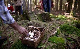 546 cas d'intoxication, dont un cas grave chez un enfant, liés à la consommation de champignons, ont été recensés entre le 1er juillet et le 6 octobre, selon les autorités sanitaires qui mettent en garde samedi les amateurs de cueillette.