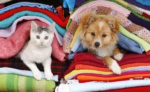 Illustration: un chaton et un chiot.