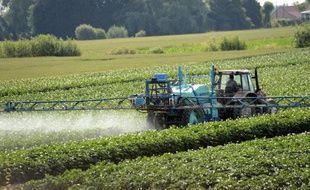 Un agriculteur pulvérise des pesticides sur son champ, le 24 juin 2014 à Vimy, près de Lens