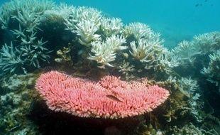 Photo non datée publiée par l'Institut australien des sciences marines le 2 octobre 2012 montrant des coraux de la Grande Barrière de corail en Australie