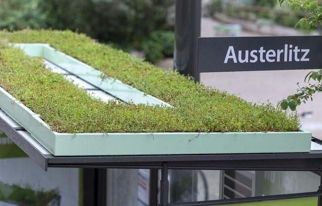 Deux abribus de Strasbourg ont vu leur toit être végétalisés.