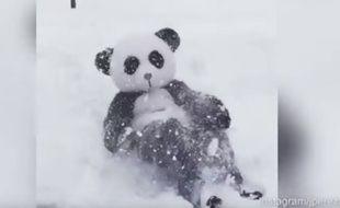 Un homme s'est déguisé en panda pour imiter Tian Tian en train de s'amuser dans la neige.