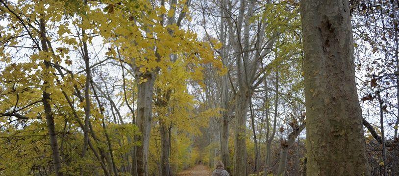 La Robertsau le 23 11 2010. Dans la forêt de la Robertsau