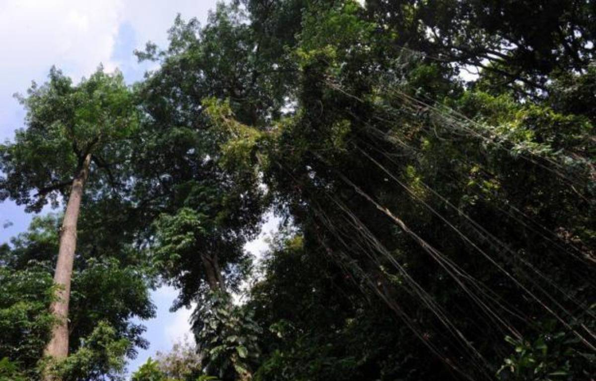 Ainsi de 2000 à 2005, ces émissions n'ont été que de 810 millions de tonnes par an, soit un tiers environ du volume estimé encore récemment. Cela ne représente que 10% du CO2 total d'origine humaine rejeté dans l'atmosphère – Romeo Gacad afp.com