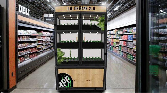 Lille: «Mes petites feuilles» plante ses petites graines directement en magasin