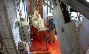 L'association L214 a révélé ce mardi une vidéo montrant des animaux maltraités dans un abattoir du Pays-Basque.