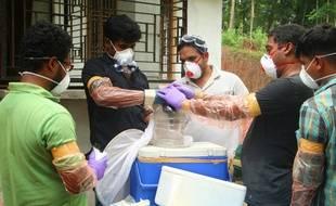 Des scientifiques indiens ont capturé une chauve-souris pour l'étudier. L'animal est responsable d'une épidémie de nipah, dans le sud de l'Inde.