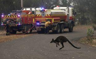 Un kangourou traverse la route à proximité de pompiers australiens, le 10 décembre 2019.