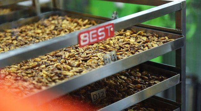 Les insectes, une nourriture d'avenir pas sans risque pour la santé