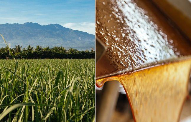 La mélasse, obtenue lors du filtrage du jus de la canne à sucre, est l'ingrédient initial du Don Papa.