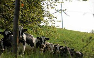 Les vaches et les éoliennes, sources d'énergie renouvelable.