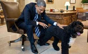 Bo, le chien des Obama et star de la Maison Blanche est mort le 8 mai 2021