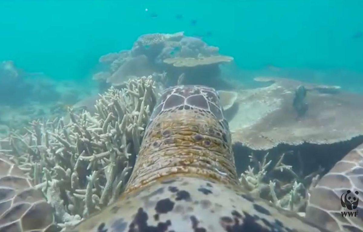 Capture d'écran d'une vidéo du WWF Australia, montrant la Grande barrière de corail vue depuis le dos d'une tortue. – YouTube/WWF-Australia