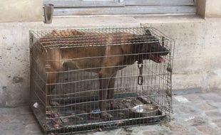 Echo vivait depuis deux ans dans cette cage rangée à l'arrière d'une fourgonnette.