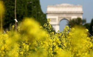 La nature à l'honneur sur les Champs Elysées, à Paris le 23 mai 2010.
