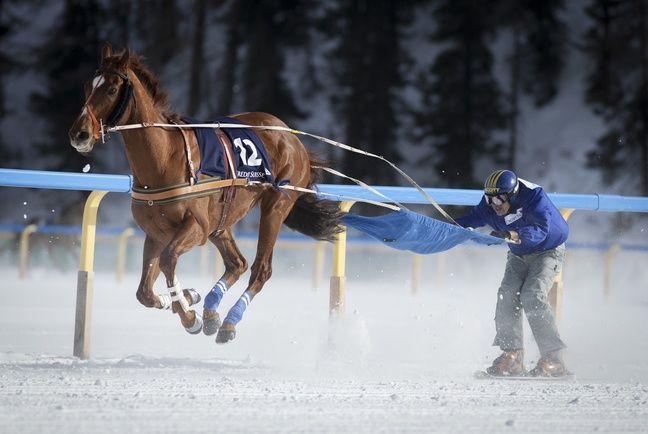 En Pologne, il existe même des compétitions de ski joëring.