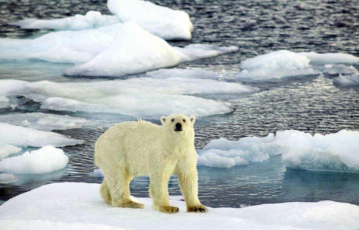 La température de l'air arctique a atteint un record en 2015. – CATERS NEWS AGENCY/SIPA