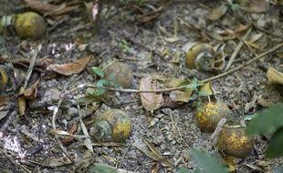 Kouagna le 13 decembre 2012. Signalisation d'UXO et bombes a sous munitions par un habitant du village.
