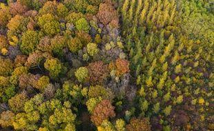 Une forêt, à Lizy-sur-Ourcq (illustration). Photo J.Witt / SIPA
