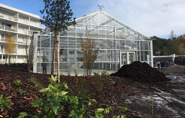 Une serre de 300 m2 est cultivée par Kanopée Koncept à Floirac.