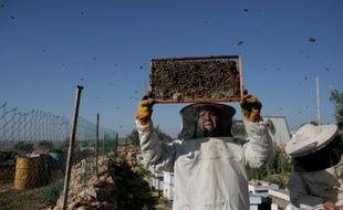 Une apicultrice palestinienne le 29 février 2016 à Deir Ballut, au nord de Ramallah