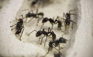 Détail de l'exposition Mille milliards de fourmis (Palais de la découverte, 2013/14)   // Photo : V. Wartner / 20 Minutes