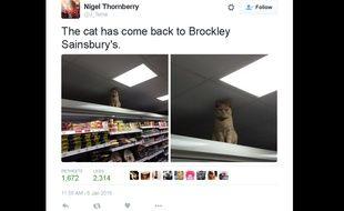 Capture d'écran d'un tweet d'un internaute montrant Olly, le chat qui aime rester perché sur les étagères d'un supermarché de Brockley, au sud de Londres.