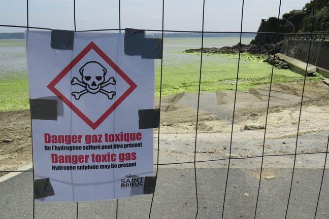 Partout, dans la baie de Saint-Brieuc, des affiches alertent du danger de l'hydrogène sulfuré dégagé par les algues vertes en putréfaction.