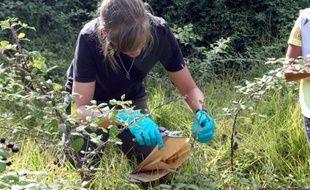 Collectes d'échantillons de plantes soupçonnées être infectées par la bactérie Xylella Fastidiosa le 29 juillet 2015 à Propriano en Corse