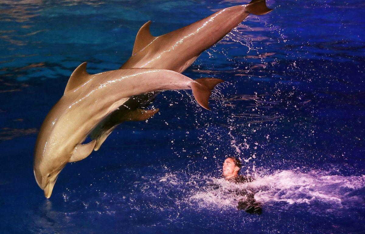 Des dauphins sautant hors de l'eau lors d'un spectacle de nuit au marineland d'Antibes le 7 décembre 2016 / AFP PHOTO / VALERY HACHE – AFP