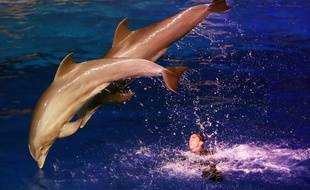 Des dauphins sautant hors de l'eau lors d'un spectacle de nuit au marineland d'Antibes le 7 décembre 2016 / AFP PHOTO / VALERY HACHE