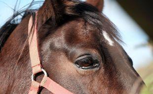 Le département de l'Ain a enregistré son premier cas de cheval mutilé, une jument en l'occurrence.