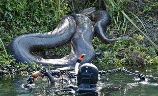 Illustration d'un anaconda.