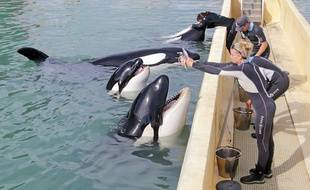 Les quatre autres orques de Marineland, ce mercredi matin, avec leurs soigneurs