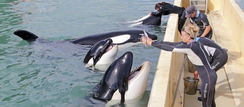 Les quatre autres orques de Marineland